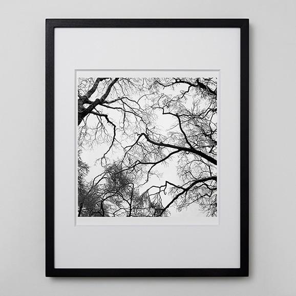 【写真】林雅之 「BW Forest001」