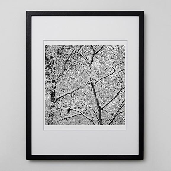 【写真】林雅之 「BW Forest002」