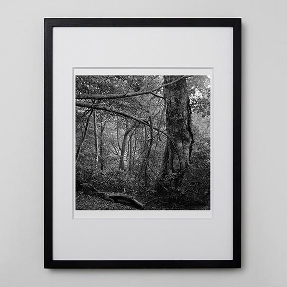 【写真】林雅之 「BW Forest003」