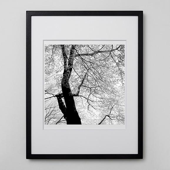 【写真】林雅之 「BW Forest004」