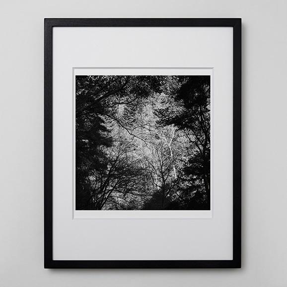 【写真】林雅之 「BW Forest005」