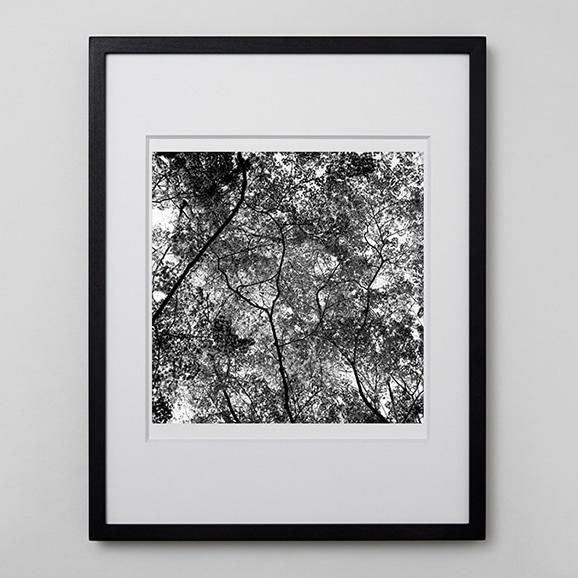 【写真】林雅之 「BW Forest007」