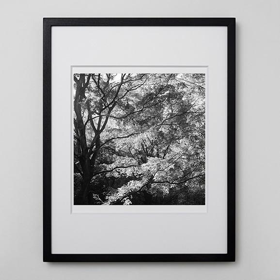 【写真】林雅之 「BW Forest008」