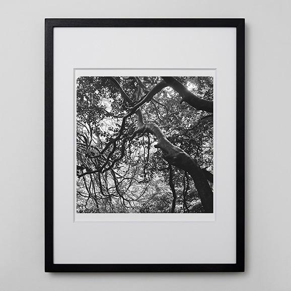 【写真】林雅之 「BW Forest009」
