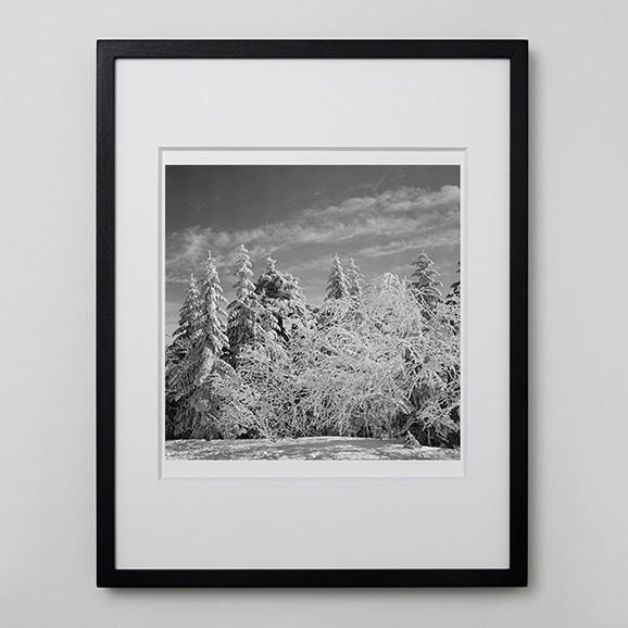 【写真】林雅之 「BW Forest010」