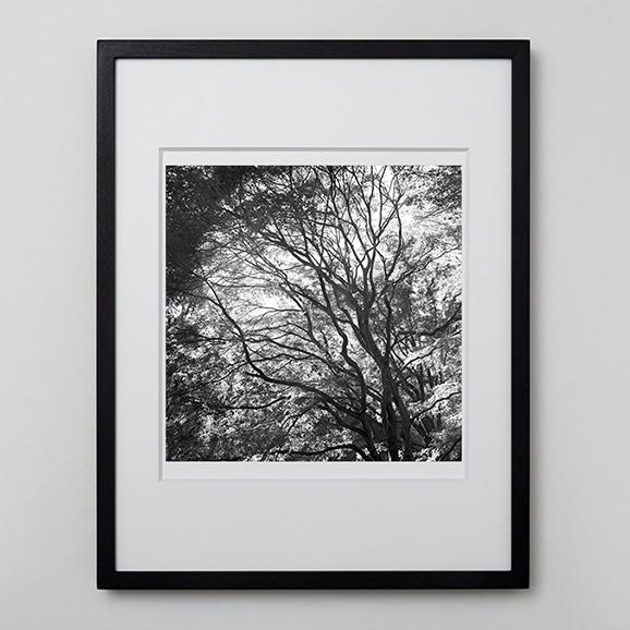 【写真】林雅之 「BW Forest011」