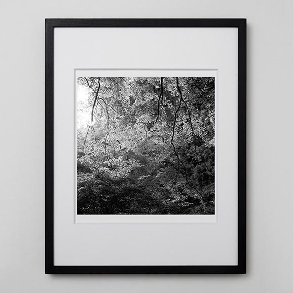【写真】林雅之 「BW Forest012」