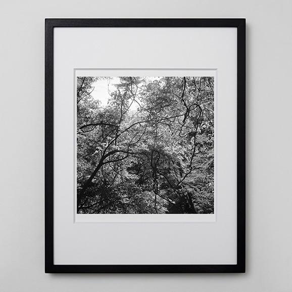 【写真】林雅之 「BW Forest013」
