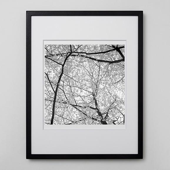 【写真】林雅之 「BW Forest014」
