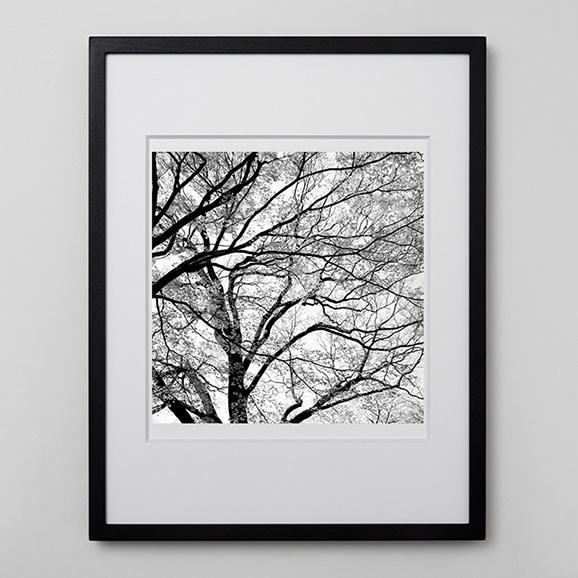 【写真】林雅之 「BW Forest015」