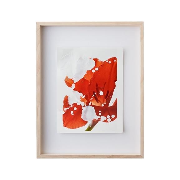 【写真】【一点物】安田奈緒子×林雅之 Mサイズ「Over Lap 005 Gladiolus」