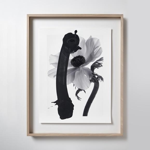 【写真】【一点物】安田奈緒子×林雅之 Lサイズ「Over Lap 012 Rananculus」
