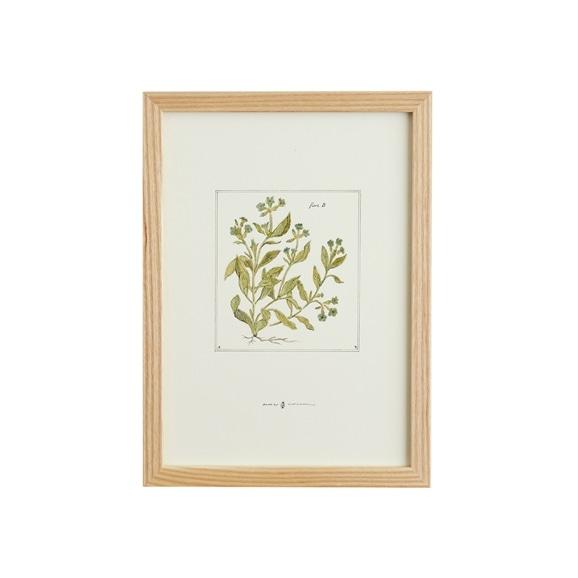 【写真】【一点物】coricci 「botanical 002」