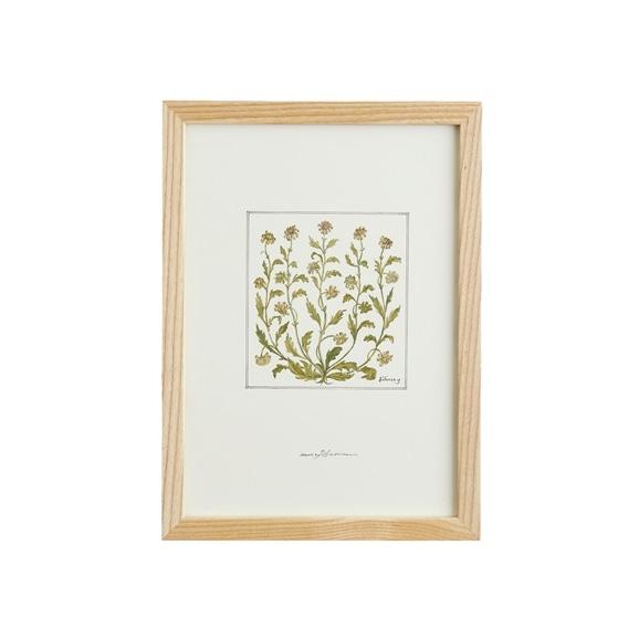 【写真】【一点物】coricci 「botanical 003」