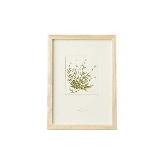 【写真】【一点物】coricci 「botanical 009」