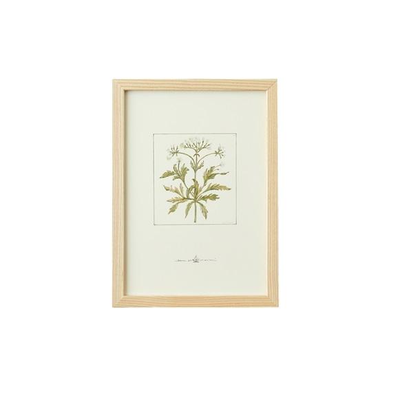 【写真】【一点物】coricci 「botanical 010」