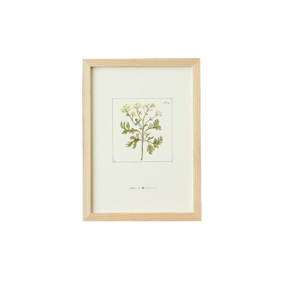 【写真】【一点物】coricci 「botanical 011」
