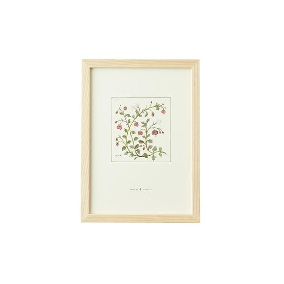 【写真】【一点物】coricci 「botanical 012」