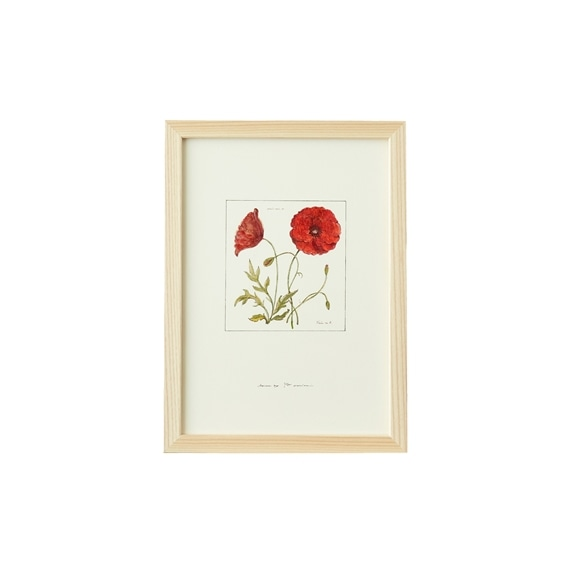 【写真】【一点物】coricci 「botanical 013」