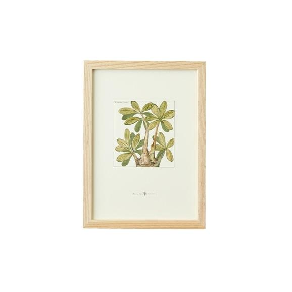 【写真】【一点物】coricci 「botanical 015」