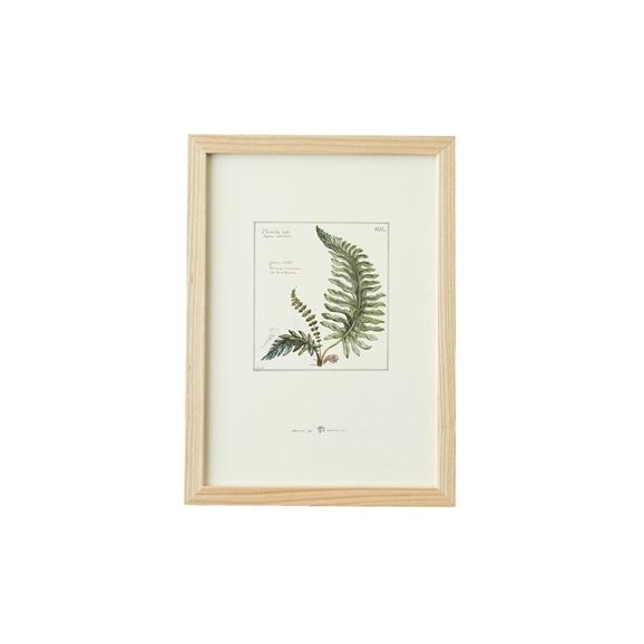 【写真】【一点物】coricci 「botanical 016」