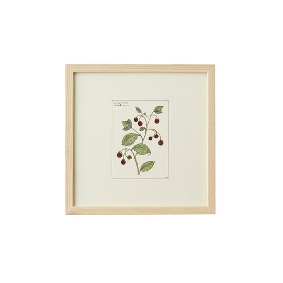 【写真】【一点物】coricci 「botanical 021」