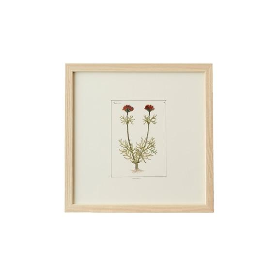 【写真】【一点物】coricci 「botanical 023」