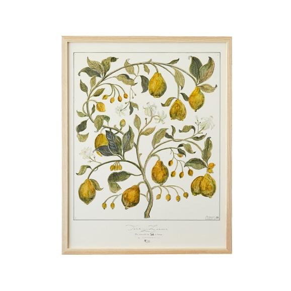 【写真】【一点物】coricci 「Botanical Concept」