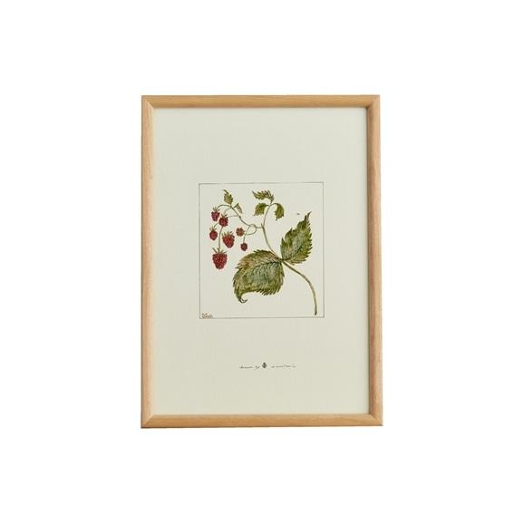 【写真】【定番品】coricci 「botanical ラズベリー」