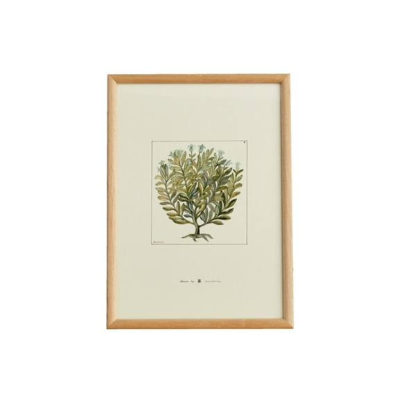 【写真】【定番品】coricci 「botanical アルベロ」