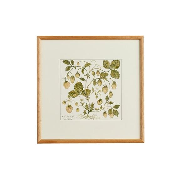 【写真】【一点物】coricci 「botanical 046」
