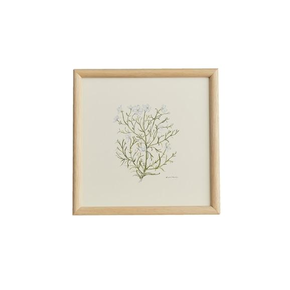 【写真】【一点物】coricci 「botanical 040」
