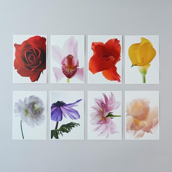 【写真】林雅之 Living Flowers ポストカードセット