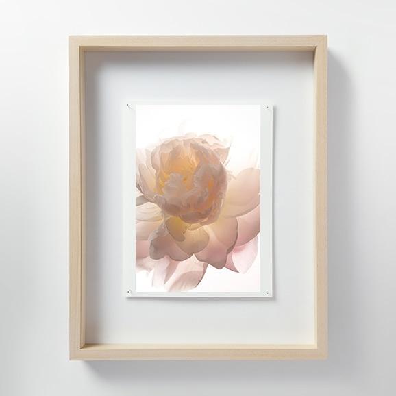 【写真】林雅之 「LF021 Paeonia シャクヤク」