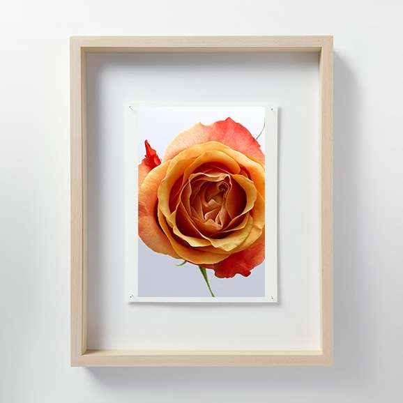 【写真】林雅之 「LF041 Rose バラ」