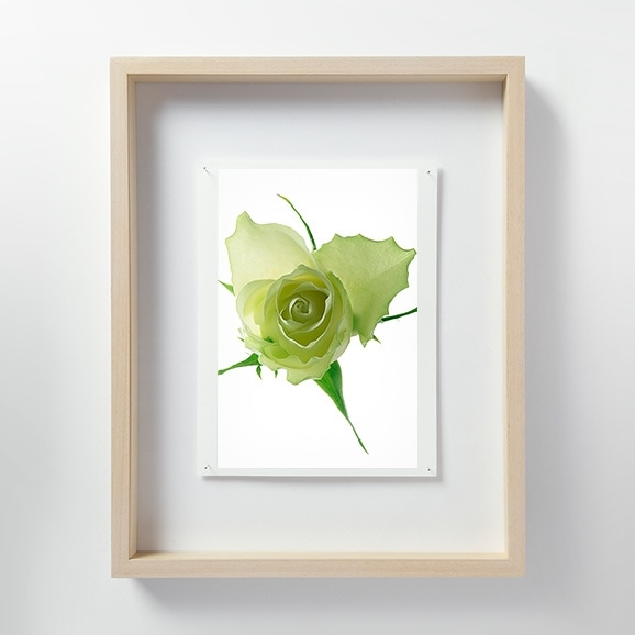 【写真】林雅之 「LF058 Rose バラ」