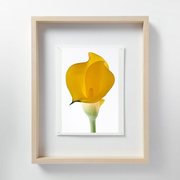 【写真】林雅之 「LF060 Calla lily カラー」