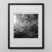 林雅之 「BW Forest012」