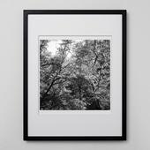 林雅之 「BW Forest013」