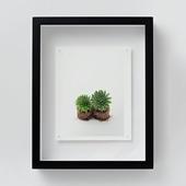 林雅之 「NT13 Sempervivum 'Gloriosum'」