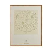 【定番品】coricci 「botanical ベルガモットの揺かご」