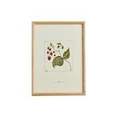 【定番品】coricci 「botanical ラズベリー」