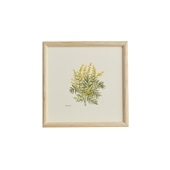 【一点物】coricci 「botanical 038」