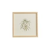 【一点物】coricci 「botanical 039」