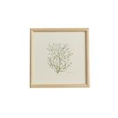 【一点物】coricci 「botanical 040」