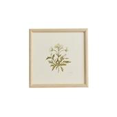 【一点物】coricci 「botanical 041」