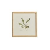 【一点物】coricci 「botanical 042」