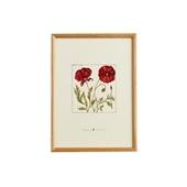 【一点物】coricci 「botanical 032」