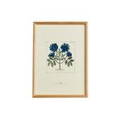 【一点物】coricci 「botanical 033」