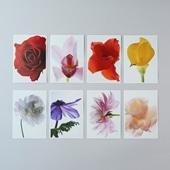 林雅之 Living Flowers ポストカードセット